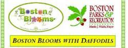 Boston Blooms Volunteer Event