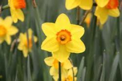 Boston Blooms At Ronan Park | Nov. 2