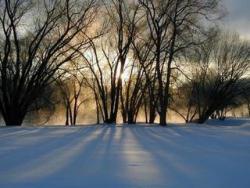 photo of nature, winter